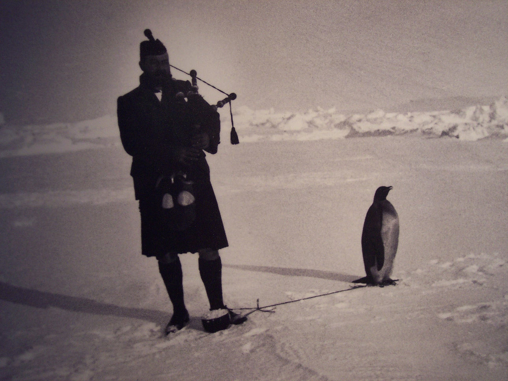 Tethered penguin with Piper Kerr.